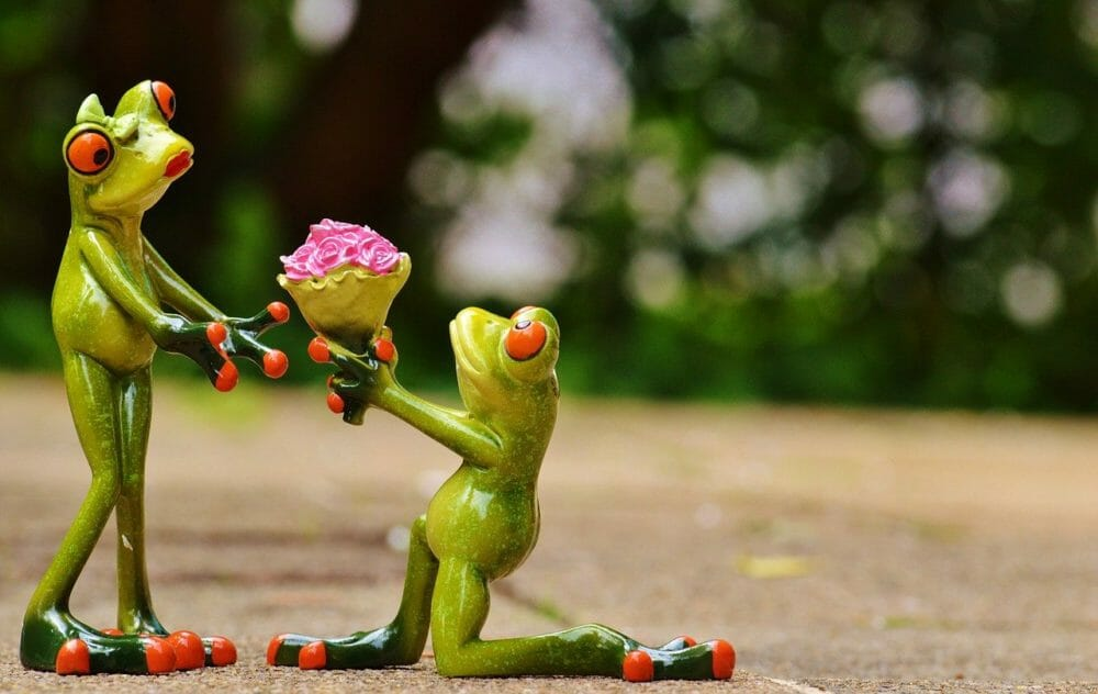 reasons to give someone a gift - frog giving flowers